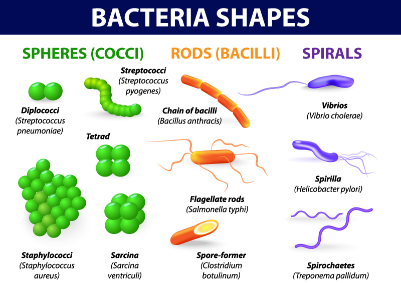 Bakteriologia