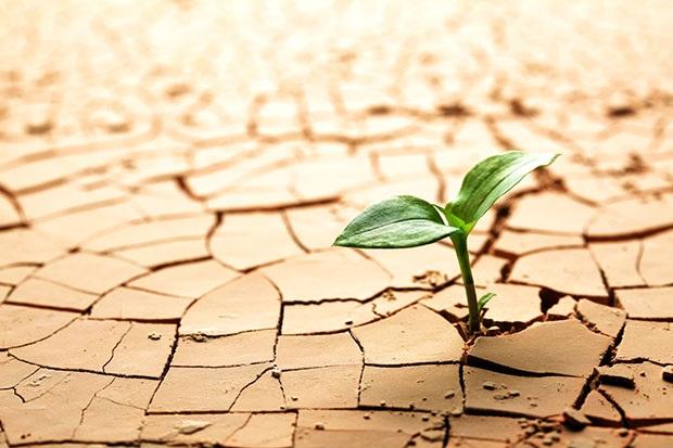 Huby pri obnove pôdneho zdravia