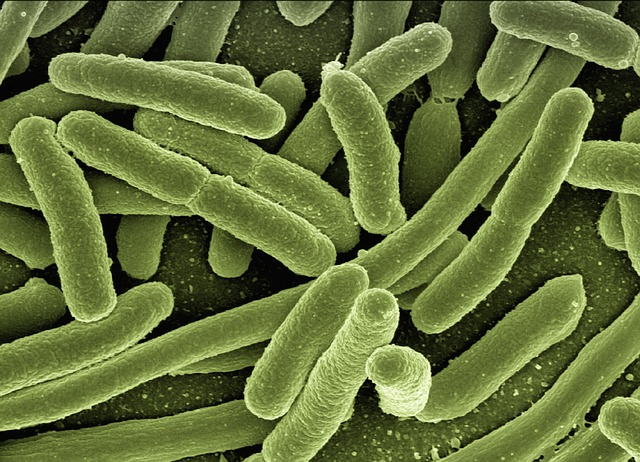 Celulóza z baktérií??? Alebo ako baktérie zachránia svet