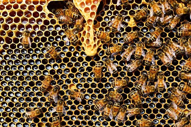 Včelie produkty a ich zloženie