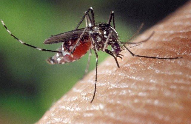 Výsledok vyhľadávania obrázkov pre dopyt komár tigrovaný