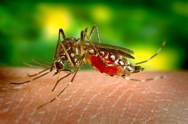 Komár tigrovaný na Slovensku